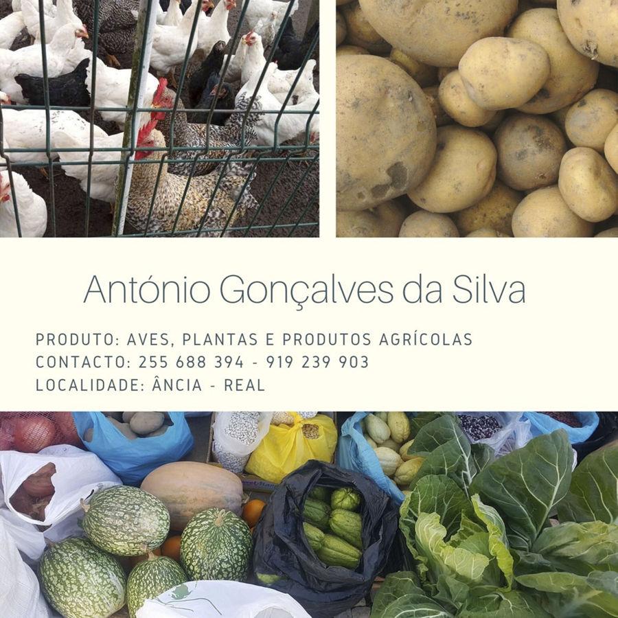 António Gonçalves da Silva