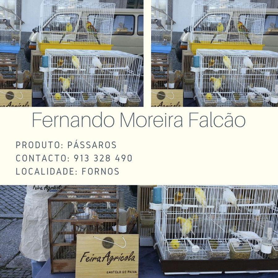 Fernando Moreira Falcão