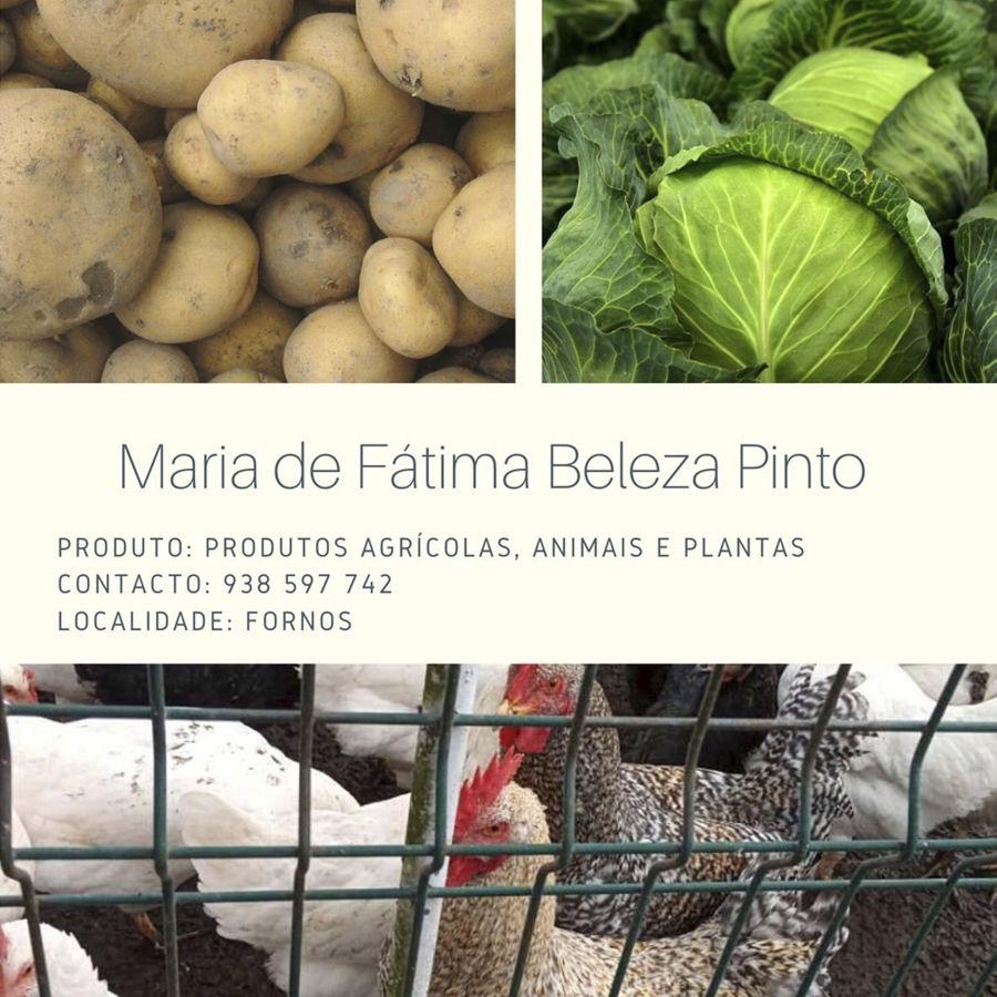 Maria de Fátima Beleza Pinto